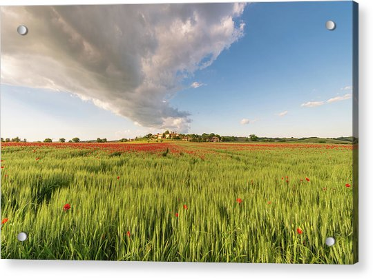 Acrylic Print featuring the photograph Tuscany Wheat Field Dotted With Red Poppies by Mirko Chessari