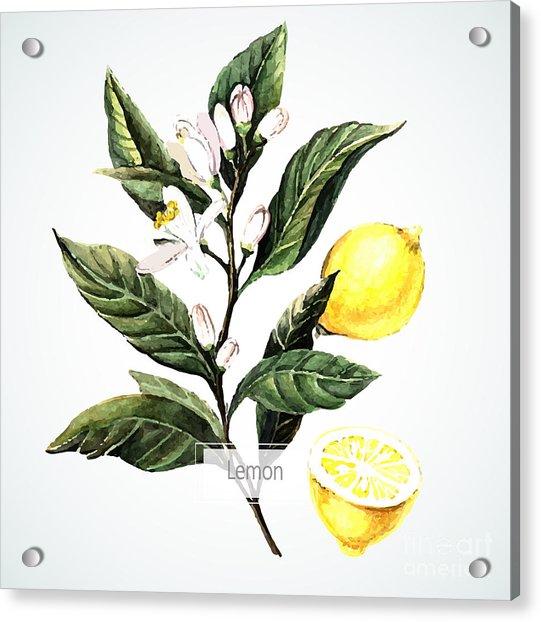 Vector Watecolor Lemon. Botanical Acrylic Print