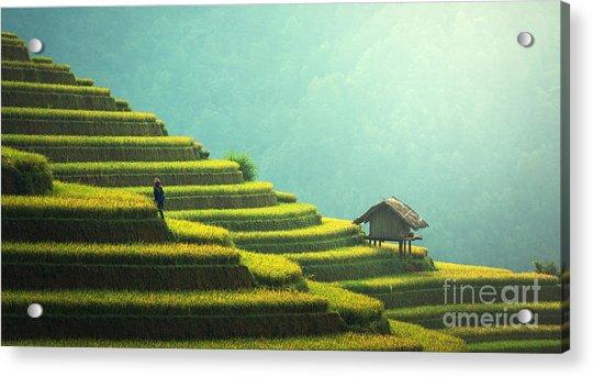 Vietnam Rice Fields On Terraced Of Mu Acrylic Print