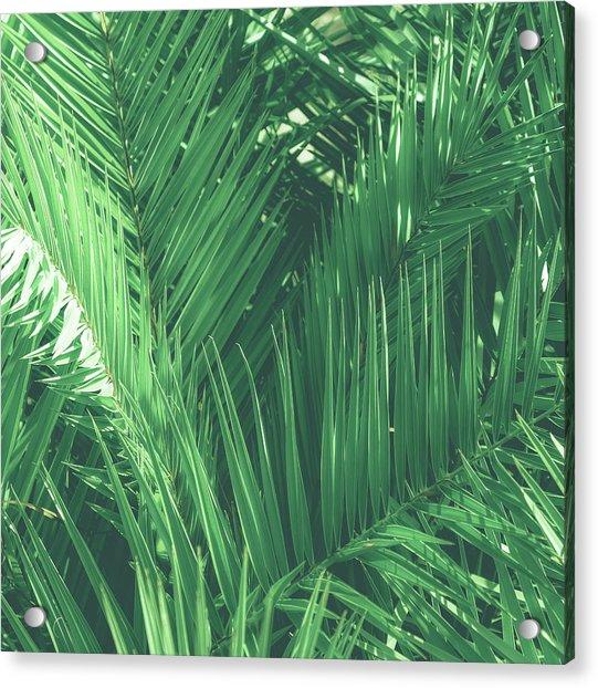 Vintage Palms I Acrylic Print