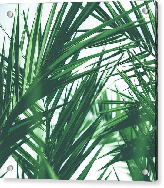 Vintage Palms IIi Acrylic Print