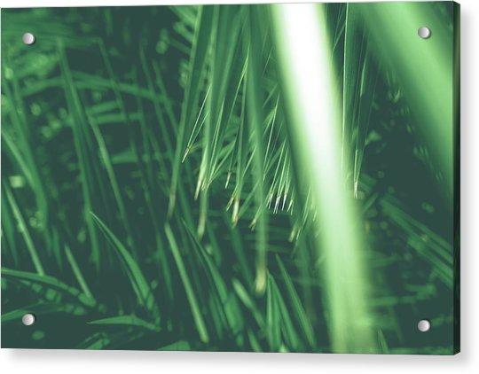 Vintage Palms Iv Acrylic Print
