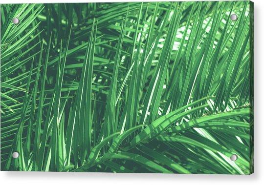 Vintage Palms V Acrylic Print