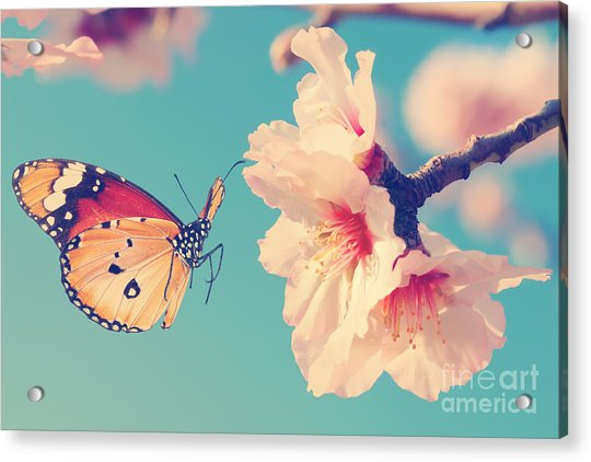 Vintage Spring Image With Butterfly And Acrylic Print