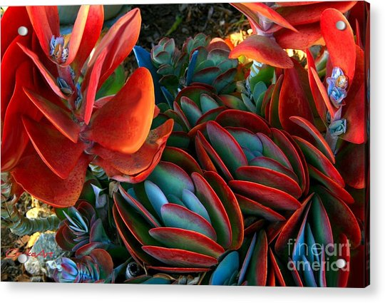 Vivid Paddle-leaf Succulent Acrylic Print