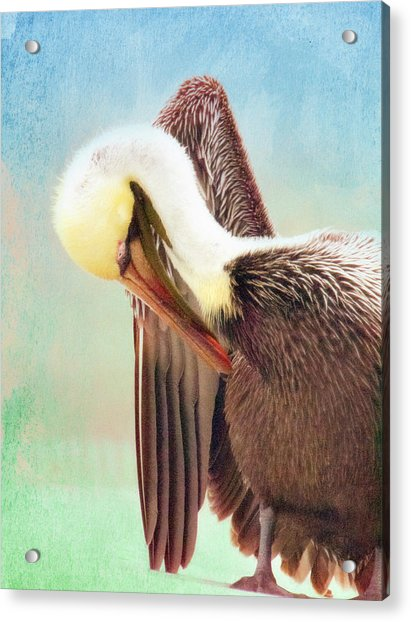 Watercolor Pelican Acrylic Print