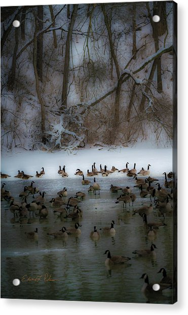 Winter Swim Acrylic Print
