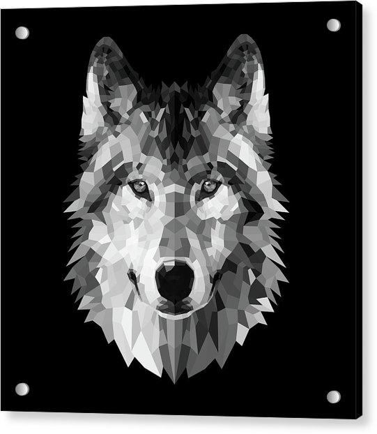 Wolf's Face Acrylic Print