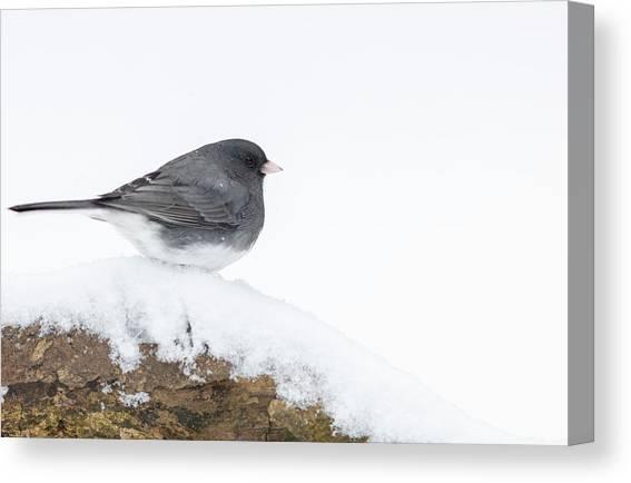 6 Christmas Cards Dark-Eyed Junco Wild Bird Watercolor Art