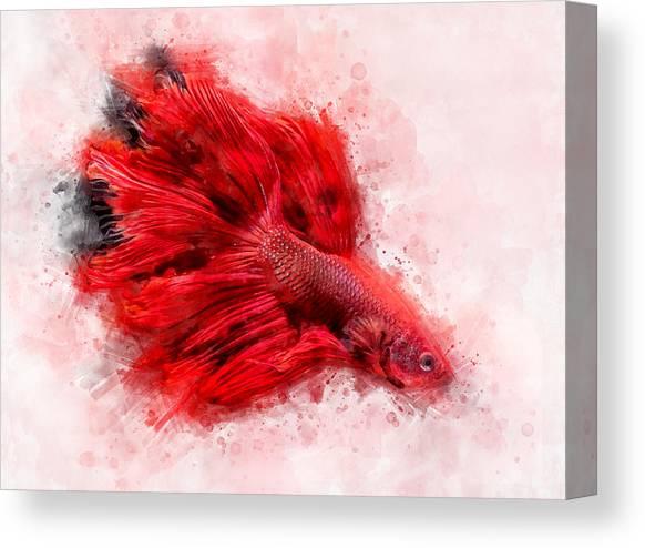 Fish Watercolor Wall Art Original Mixed Media Watercolor Art Print Siamese Fighting Fish Watercolor Art Print