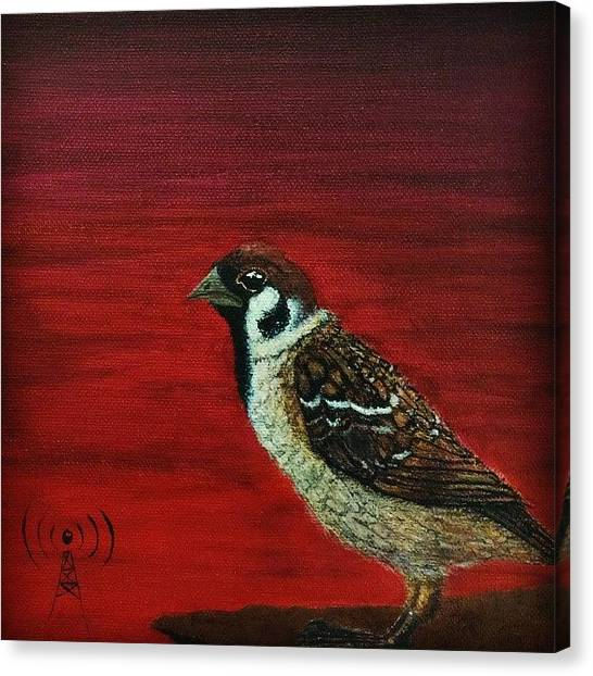 Sparrows Canvas Print - ----------------------- So Fly by Mark ODwyer