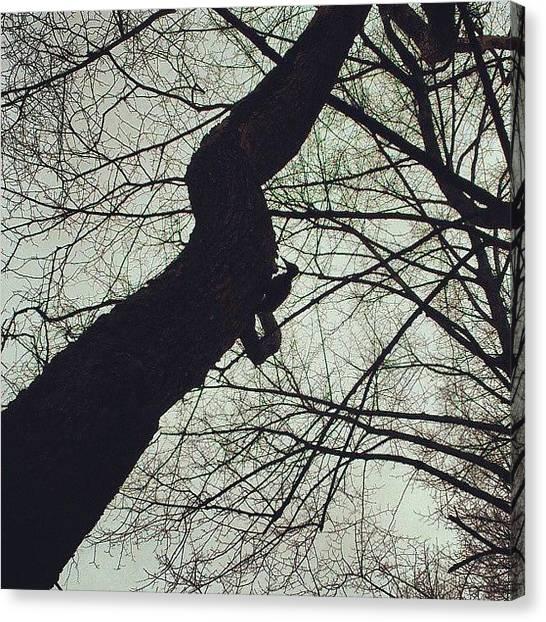 Woodpeckers Canvas Print - Да это #дятел! #bird #spring by Artur Ganiev