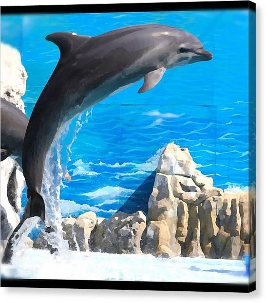 Dolphins Canvas Print - صباح النشاط by Manal Al Saleh