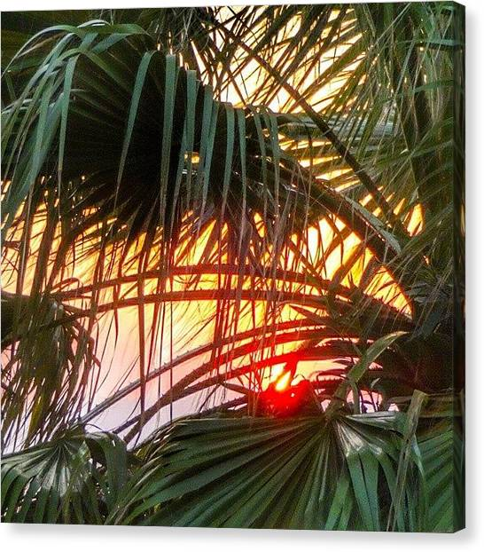 Palm Trees Sunsets Canvas Print - Потрясающий #закат by Mikhail Serebrennikov