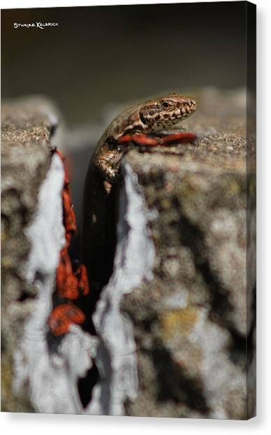 Canvas Print featuring the photograph  A Lizard Emerging From Its Hole by Stwayne Keubrick