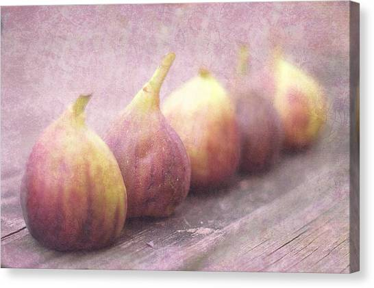 Autumn Mission Figs  Canvas Print