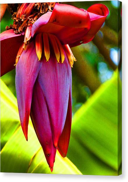 Banana Flower Glow Canvas Print by Margaret Saheed