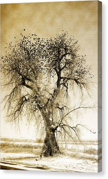Bird Tree Fine Art  Mono Tone And Textured Canvas Print