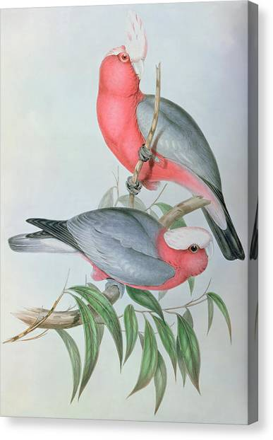 Cockatoo Canvas Print -  Birds Of Asia by John Gould