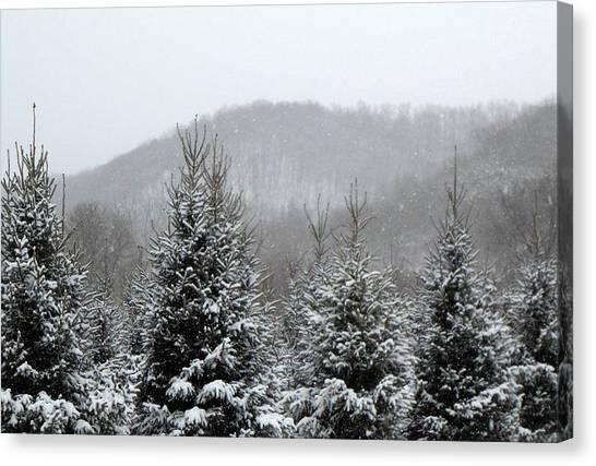 Driftless Pine  Canvas Print by Dina  Stillwell