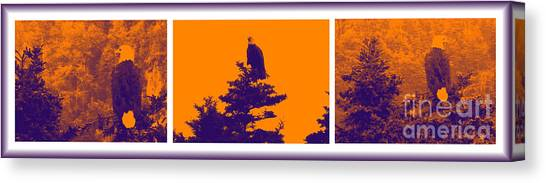 Eagle Scout Canvas Print -  Eagle Scout At Sunset by Barbara Griffin