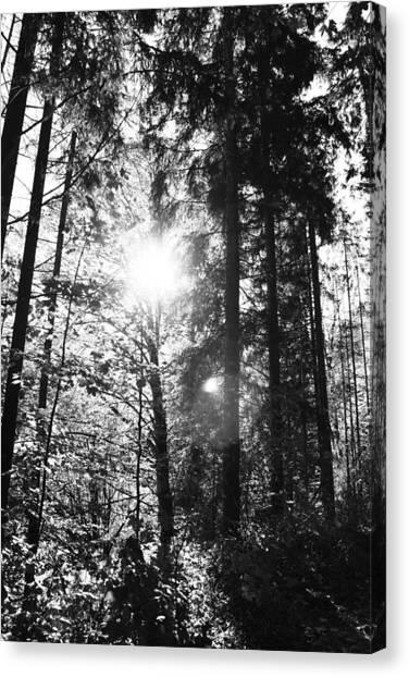Forest Canvas Print by Falko Follert