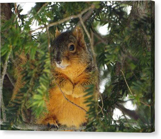 Fox Squirrel Canvas Print