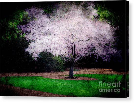 Ghostly Spring Canvas Print by Bobbi Feasel