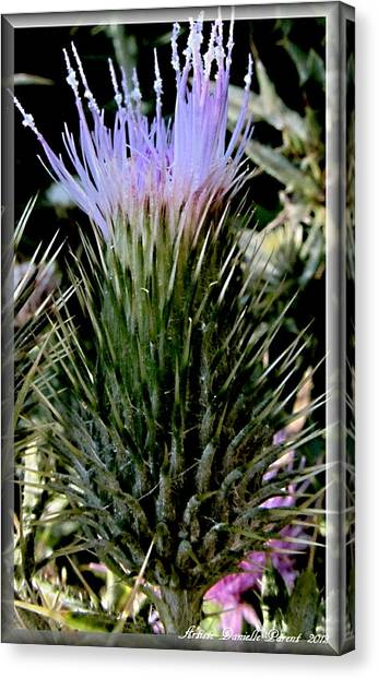 Glowing Purple Thisle Flower Canvas Print