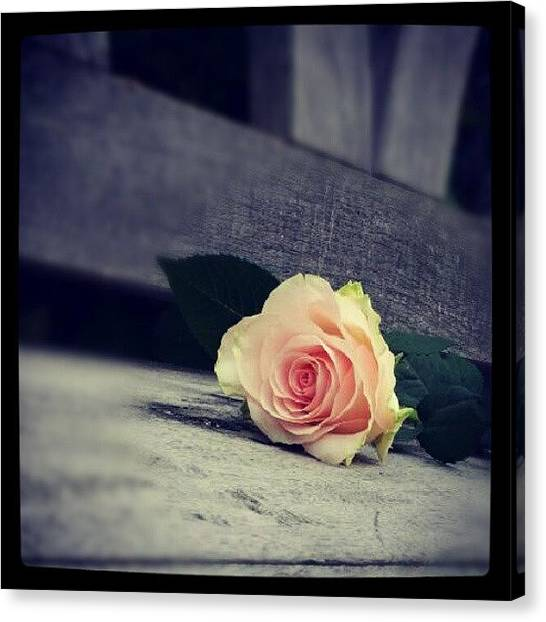 Decorative Canvas Print -  Gray In Romantik by Jacqueline Schreiber