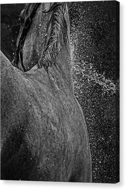Horse Cool Off Canvas Print