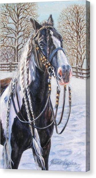 I'm Ready For The Ribbons Gypsy Vanner Horse Canvas Print