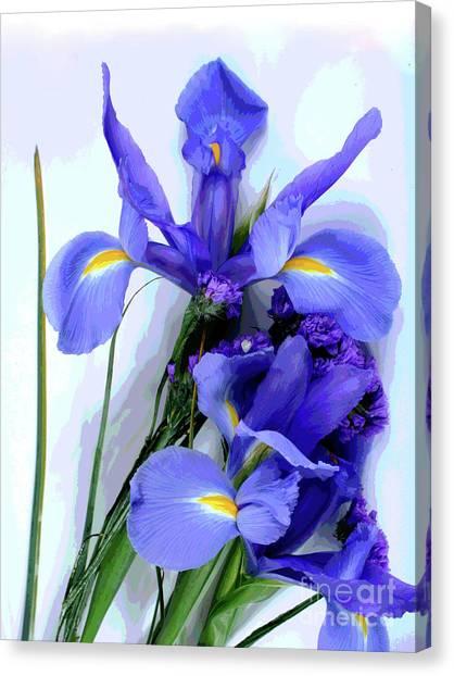 Iris -- Pretty In Purple-1 Canvas Print