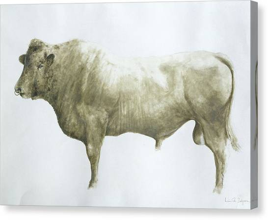Steak Canvas Print -  Islay Bull by Lincoln Seligman