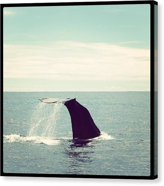 Sperm Whales Canvas Print - Whale Watching by Jac Tanner