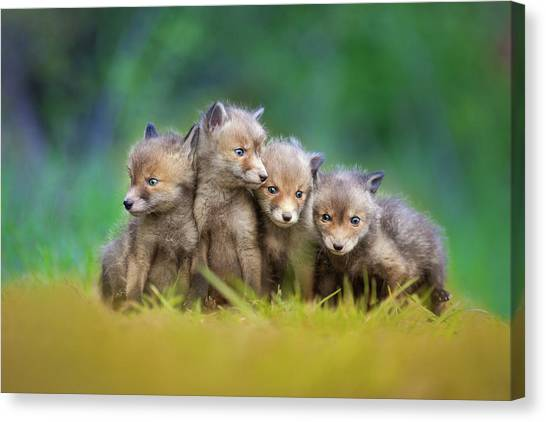 Puppies Canvas Print - ... Little Explorers ... by Pali Gerec
