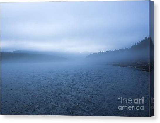 Otters Canvas Print -  Mist In Otter Cove by Diane Diederich
