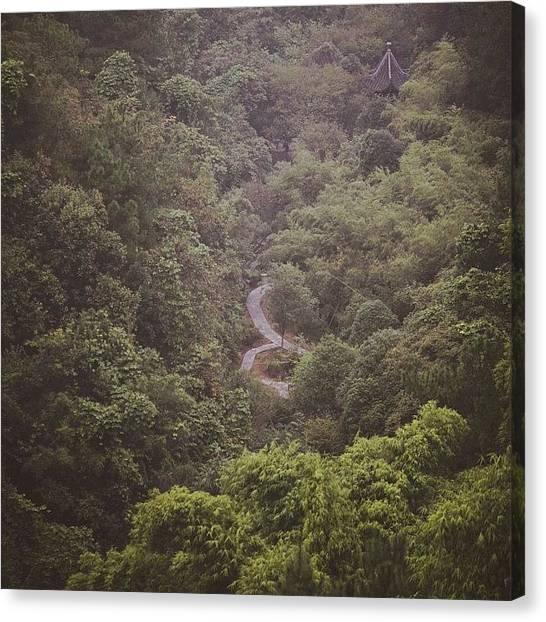 Bamboo Canvas Print - 只愿生在此山中 #mychinagram by C C