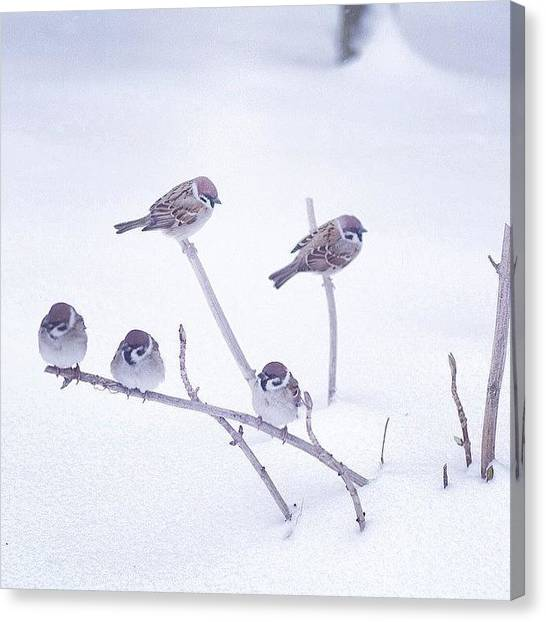 Sparrows Canvas Print - :-) :-) School If by Atsushi Doi