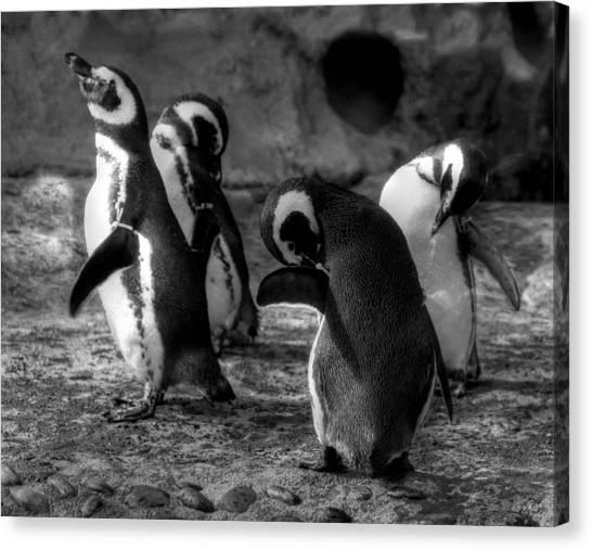 Penguin's Canvas Print