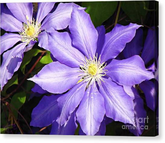 Pretty Purple Clematis Canvas Print