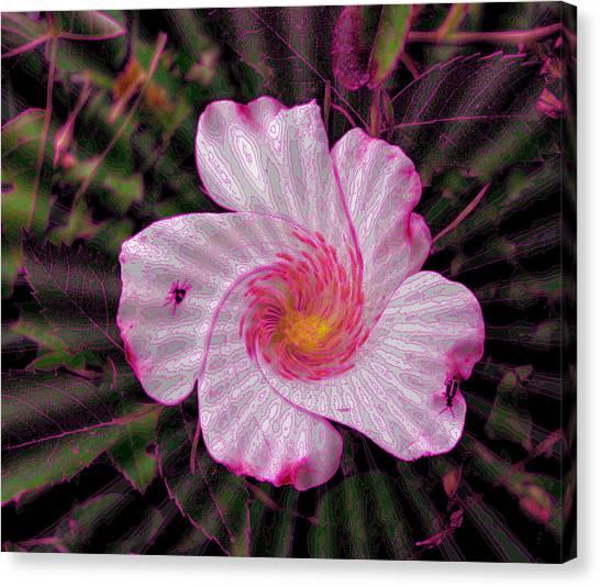 Rippling Pink Canvas Print