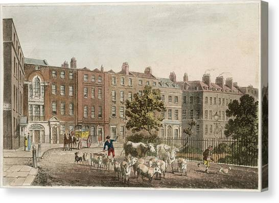 Soho Square, With Cattle         Date Canvas Print by Mary Evans Picture Library