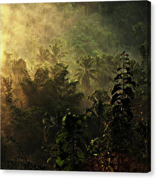 Jungles Canvas Print - ..... The Atmosphere Of The Morning ..... by Johanes Januar