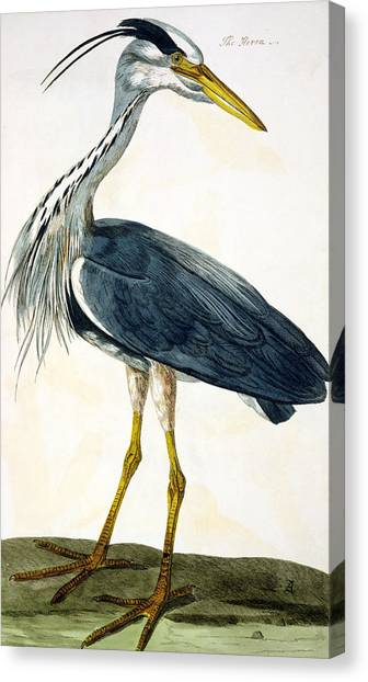 Freshwater Canvas Print -  The Heron  by Peter Paillou