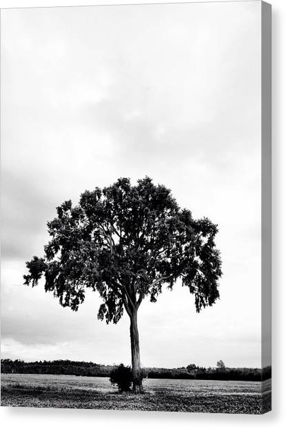 Environment Canvas Print -  The Tree Again by Kreddible Trout