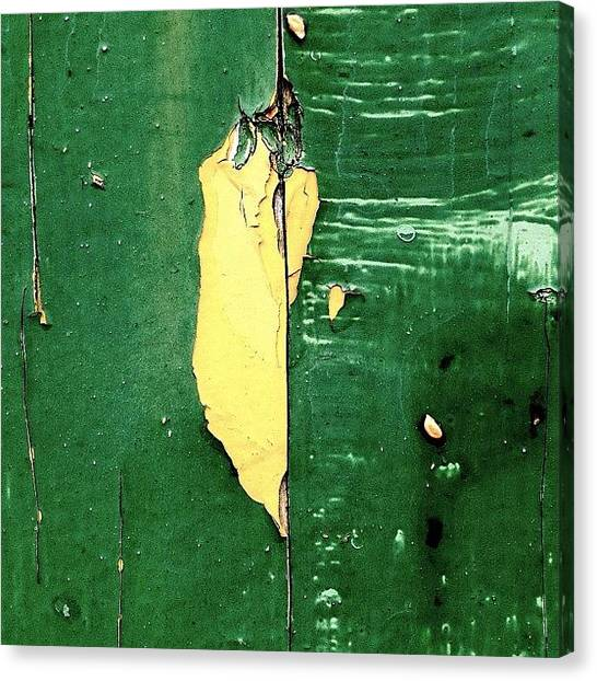 Trout Canvas Print - The Yellow Pepper  by Kreddible Trout