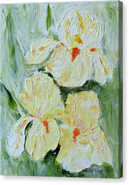 Three Yellow Irises Canvas Print