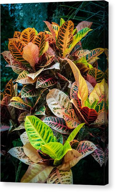 Variegated Plants Canvas Print