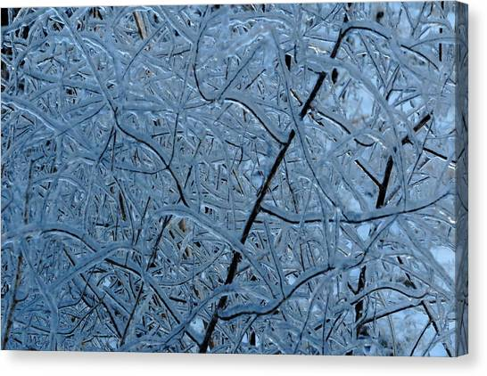 Vegetation After Ice Storm  Canvas Print